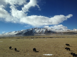Approaching 5000m on the World's highest train journey