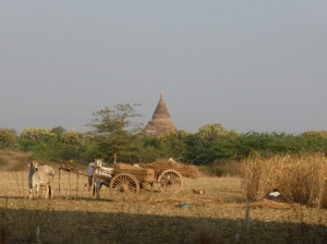 Surrounded by temples and local life... what more could you ask for?!