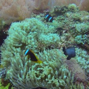 I found Nemo!