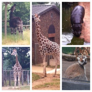Into Africa… from Lemur to Giraffe