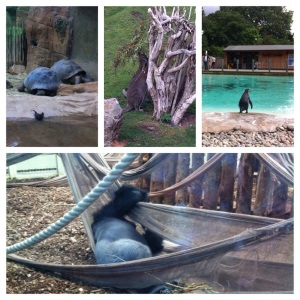 Penguins, Wallabies, Galapagos Giant Tortoise and London Zoos Silverback Gorilla