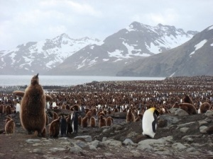 Just one of the colonies of Penguins to be found in Antarctica's harsh environment
