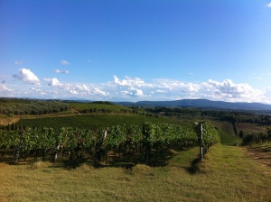 Vineyards as far as the eye could see